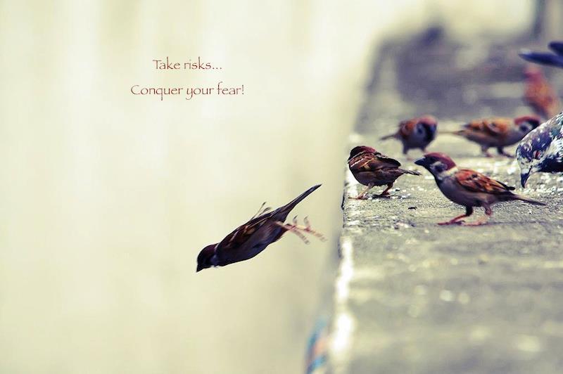 Vögel... einer fliegt davon